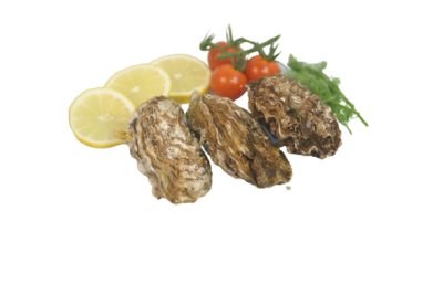 Zeeuwse oesters