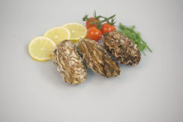 Verse Zeeuwse oesters